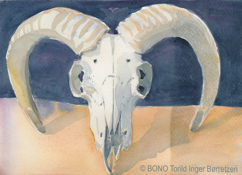 Skull-with-horn-web