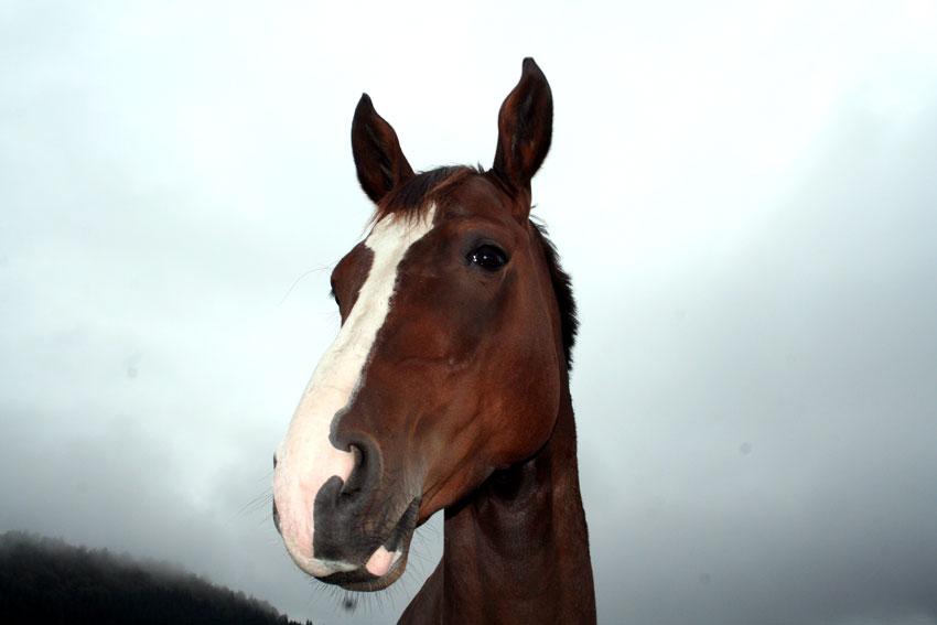 hest5